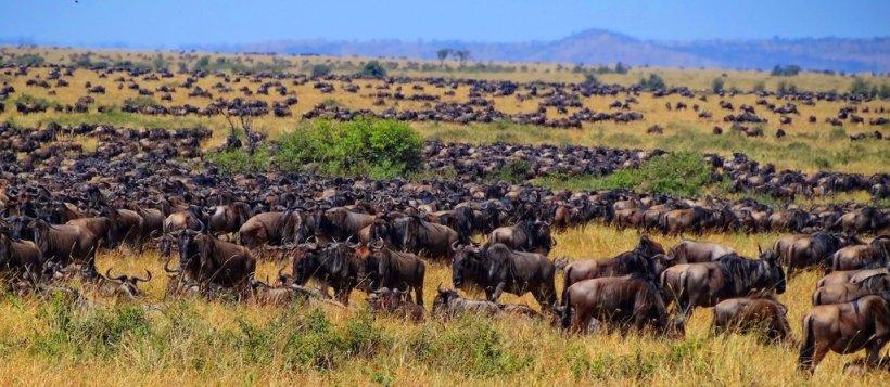 Migration_Mara