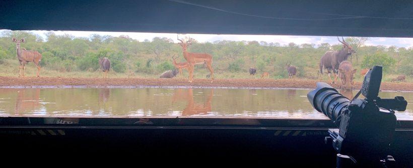 Фотоукрытие в заповеднике Zimanga