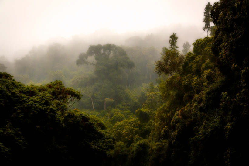 Ливневый лес Ньюнгве, Руанда