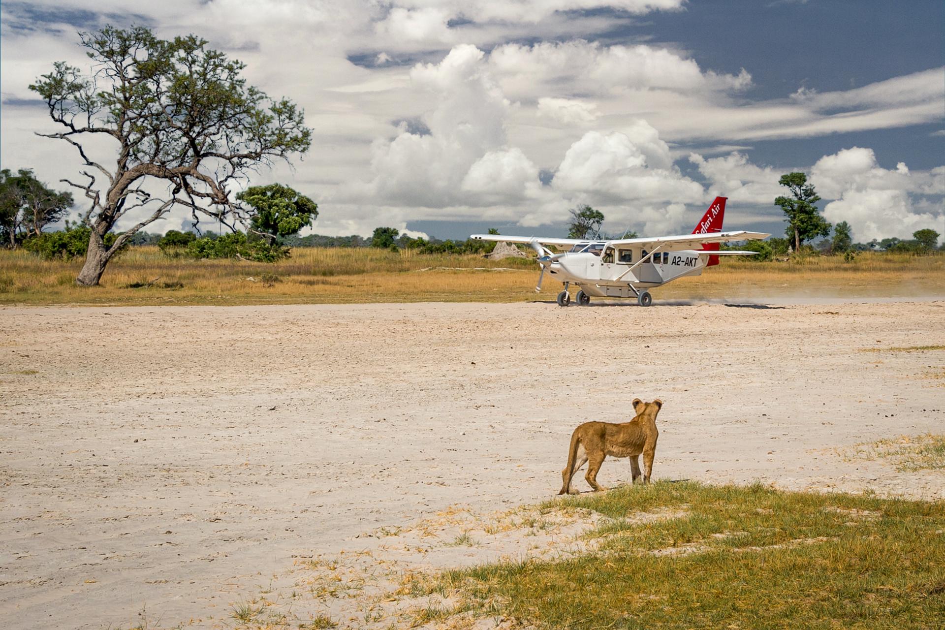 На взлётно-посадочной полосе в дельте Окаванго